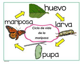 Ciclo de vida Mariposa