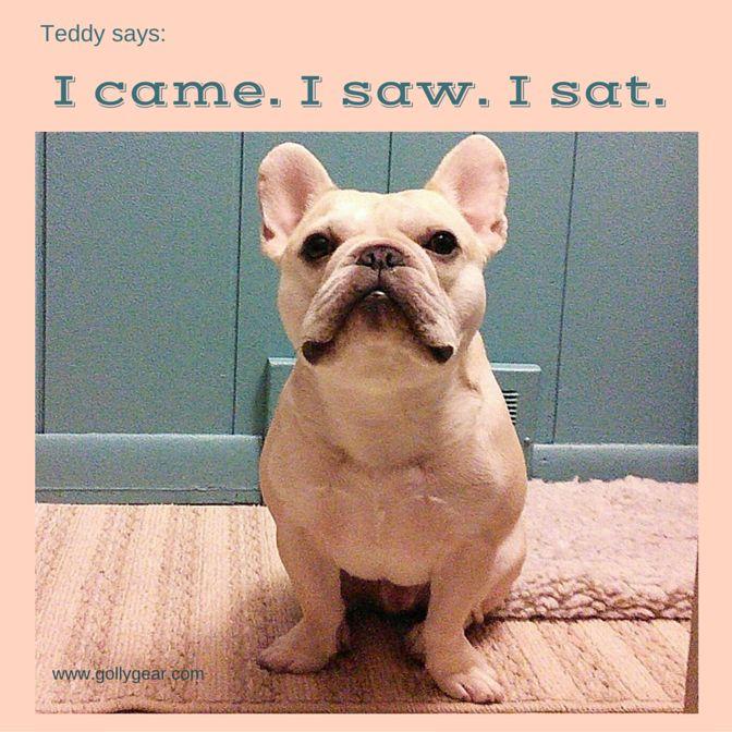 Teddy, the French Bulldog