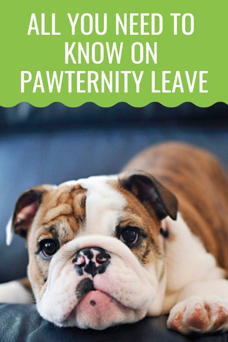 Pawternity Leave Companies That Acknowledge Your New Puppy S