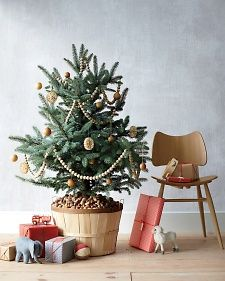 Living Christmas Tree. I love the orchard basket and assorted nut instead of a tree skirt.