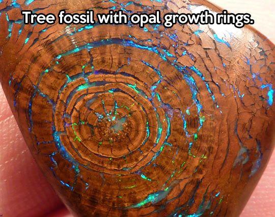 Amazing tree fossil...