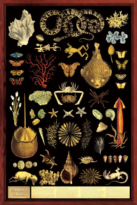 Albertus Seba (1665-1736), a Dutch apothecary, had one of the most extensive collections of natural curiosities in the world. He commissioned artists to draw all his specimens, then had them engraved and published as a set of folios.