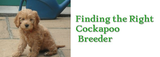 Guidance on choosing the right breeder