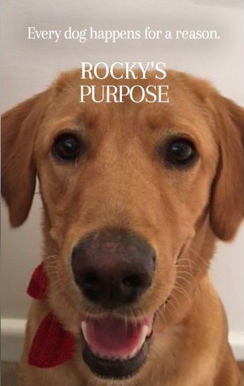 Turn your furry friend into a famous fido with the A DOG'S PURPOSE Poster Generator!  | A DOG'S PURPOSE - In Cinemas May 4