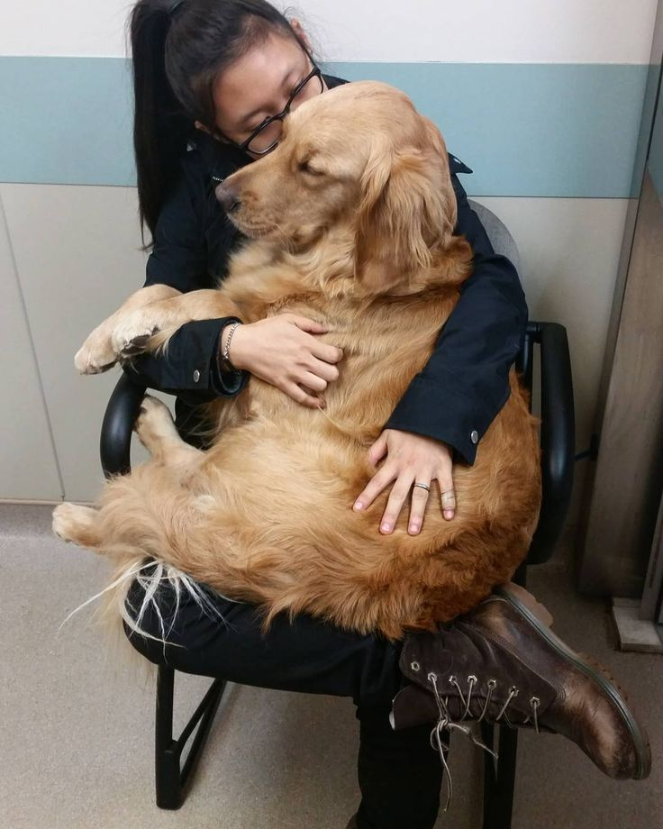 Collins was admitted. He'll receive IV fluids and anti nausea medications and have a blood panel done as well as some x-rays and an ultrasound to check for any potential blockages. It's so hard to leave him especially since it's his 2nd birthday at midnight  #dogsofinstagram #goldenretrievers #dogsofig #goldenretrieversofinstagram #puppy #servicedog #servicedogsofinstagram #sdit #respectthevest #servicedogintraining #servicedogteam #servicedogsofig #ilovegolden_retrievers #dogstagram by…