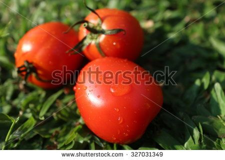 tomato background
