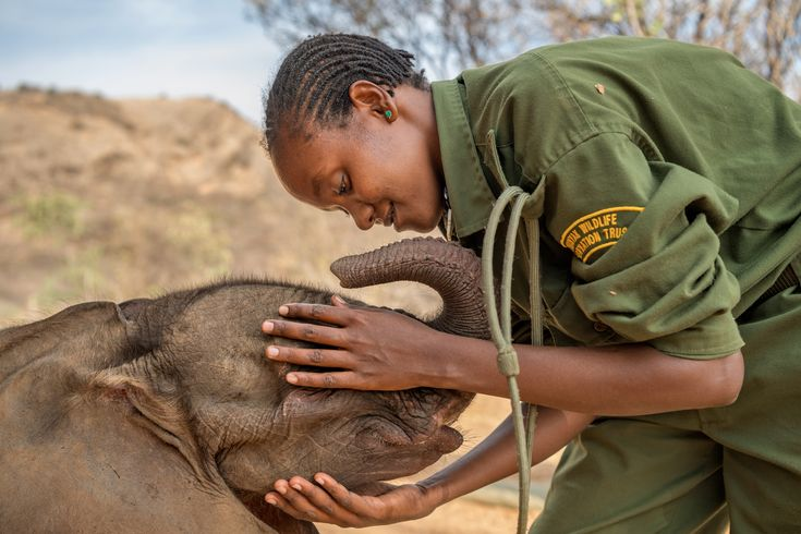 Picture of an elephant sanctuary in Africa Mary Lengees, one of Reteti's first female elephant keepers, caresses Suyian, the first resident. Suyian was rescued in September 2016 when she was just four weeks old.