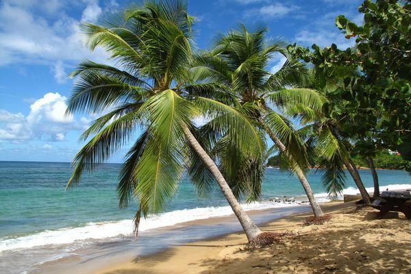 Karibik: 16 Tage Zu Fuß durch Martinique, Dominica und Guadeloupe