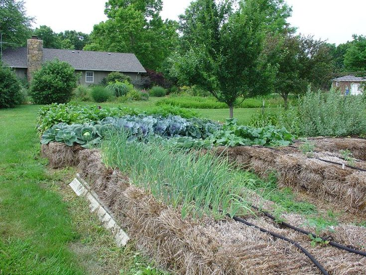 Straw Bale Gardening Straw Bale Gardening Pinterest Gardens The Long And Fit