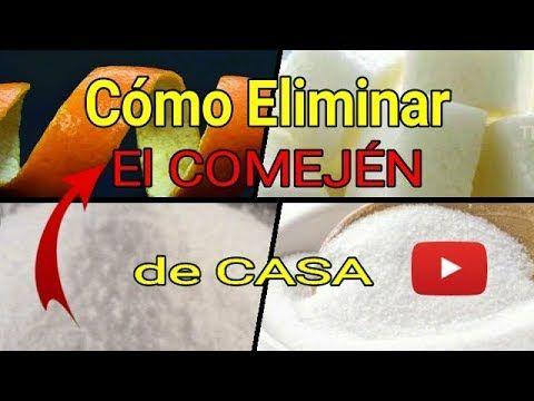 Como Acabar Con Las Termitas Como Eliminar Comejenes De Casa Termitas Youtube Termitas