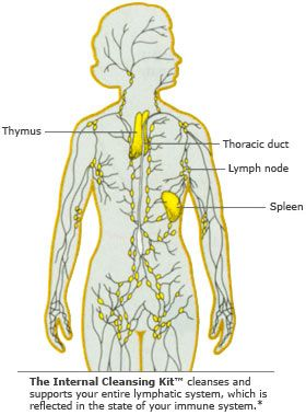 17 Best Images About A Amp P Chapter 12 Lymphatic System