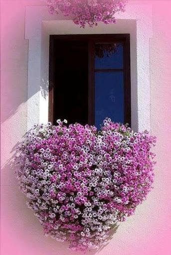 Window box. Loos like wax flower!!  Love them and they smell sooooooo good!