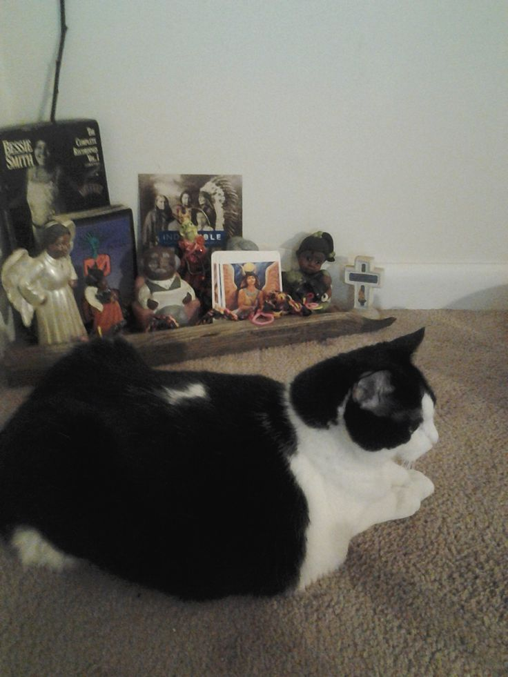 Temple of My Familiar is one of my favorite books by Alice Walker. This altar no longer exists, but the Kitty Pose is classic feline...Sphinx.