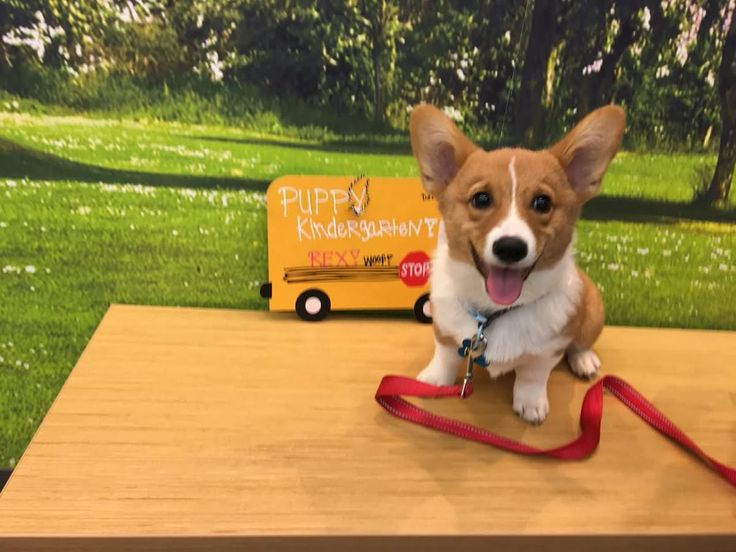 Rexy loves going to puppy kindergarten! https://i.imgur.com/eOohxEt.jpg