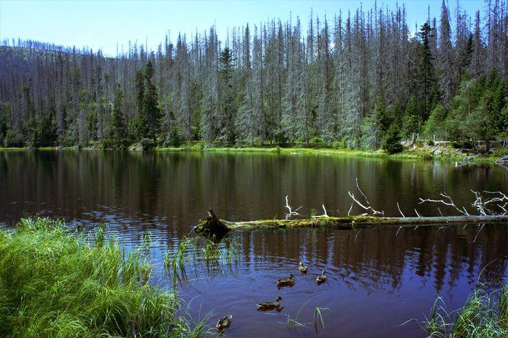 jezero Laka - Šumava - Böhmerwald - Czech republic