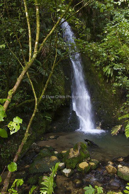 Waterfall at McLaren Falls Park, Tauranga |  © Elyse Childs Photography
