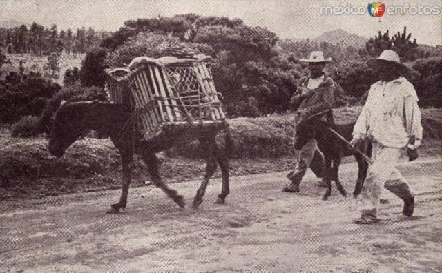 Arrieros y burro de carga. Cortesía: www.MexicoEnFotos.com (Mexico)