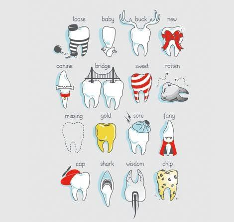 Teeth caricatures: Loose tooth, Baby tooth, Buck teeth, New tooth, Canine tooth, Bridge, Sweet tooth, Rotten tooth, Missing tooth, Gold tooth, Sore tooth, Fang, Capped tooth, Shark tooth, Wisdom tooth, Chip