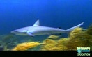 Sharks: Great Mysteries of the Natural World