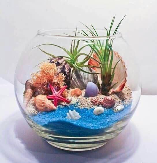 - My Terrariums, Tillandsia & Succulents wedding Terrarium succulentes Terrarium Diy, Air Plant Terrarium, Terrarium Wedding, Seashell Crafts, Beach Crafts, Air Plants, Indoor Plants, Sand Art, Miniature Fairy Gardens