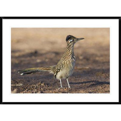 """Global Gallery 'Greater Roadrunner Profile' Framed Photographic Print Size: 30"""" H x 42"""" W x 1.5"""" D"""