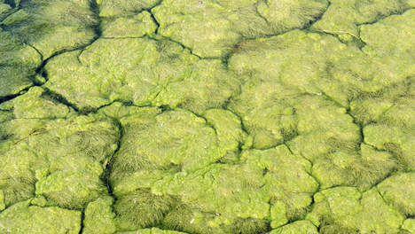 Biobrandstof, voedsel, cosmetica, verf: algen zijn overal goed voor - Wetenschap & Gezondheid - VK Algen blijken veel beter inzetbaar voor de productie van bestanddelen van onder meer verf, cosmetica, voedsel en voor bio-energie dan gedacht. Ook de productiekosten van de plantjes zijn sneller gedaald net als de raffinagekosten van de algen. Commerciële toepassingen komen een stap dichterbij.