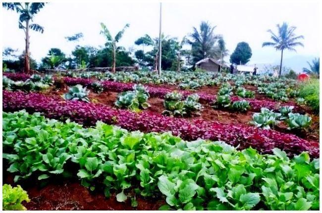 Petani-petani di wilayah Kota Batu, Jawa Timur, yang menggeluti pertanian organik akan mendapatkan subsidi dari pemerintahan kota setempat