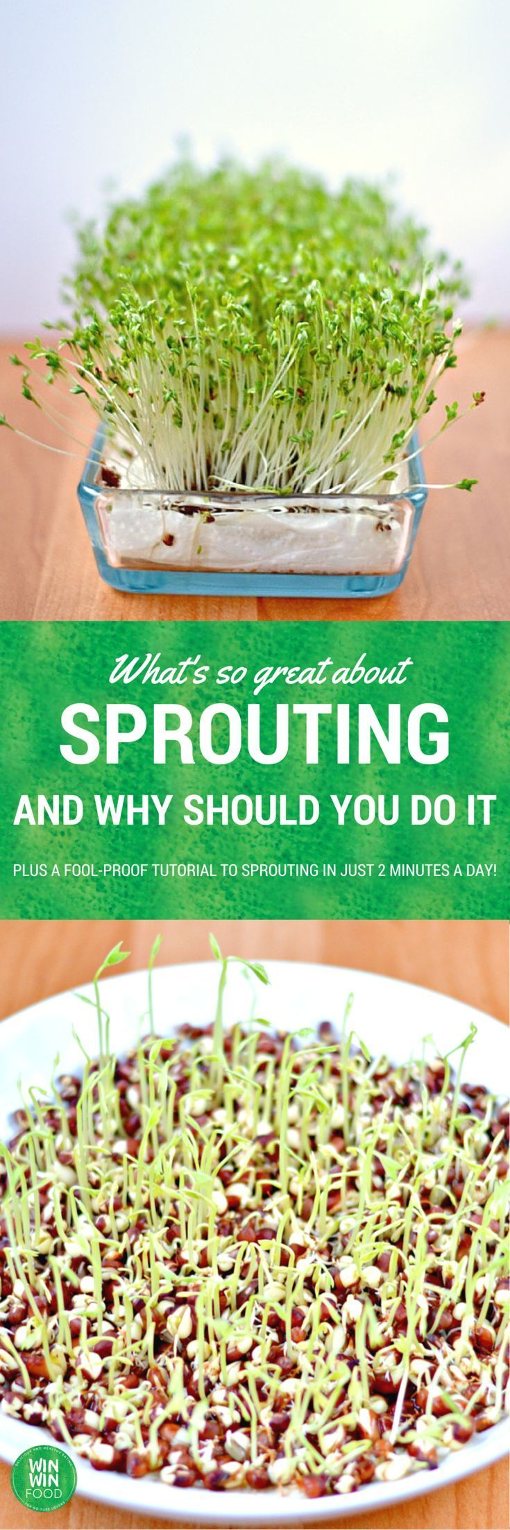 Sprouting Tutorial | WIN-WINFOOD.com #healthyliving #nutrition