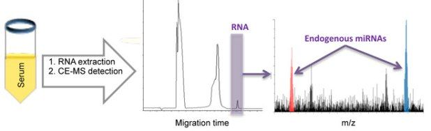 Global Medical Discovery features paper: Direct detection of endogenous MicroRNAs and their post-transcriptional modifications in cancer serum by capillary electrophoresis-mass spectrometry
