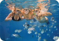 Cozumel Mexico, Travel Info, Hotels, Tours, Transfers & More