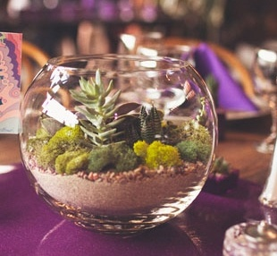 Cactus terrarium
