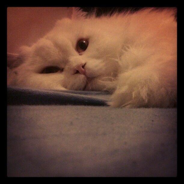 My love :)