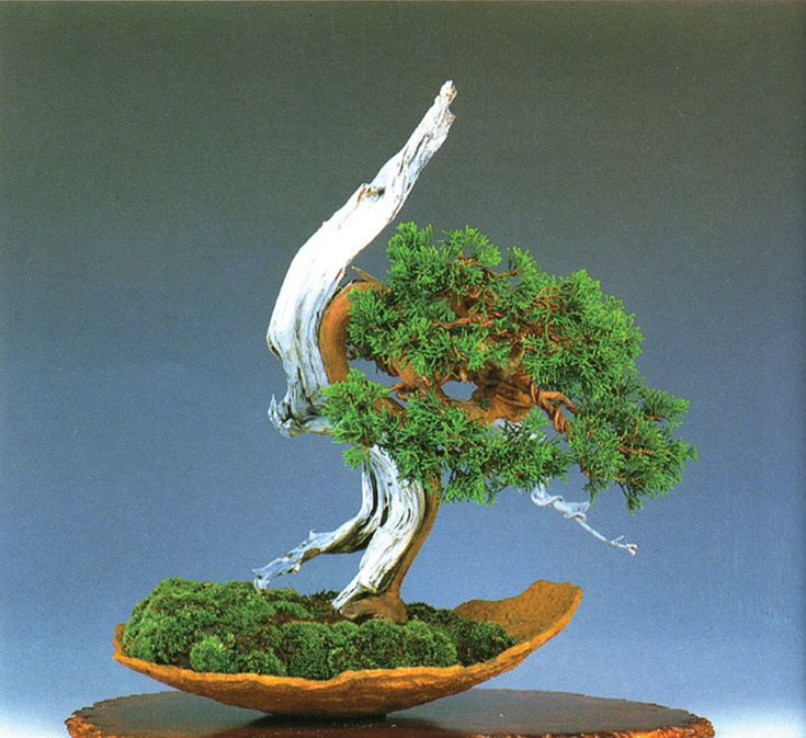 Types & Uses of Bonsai Wire & Why Blogging About Bonsai Is a Total Disaster