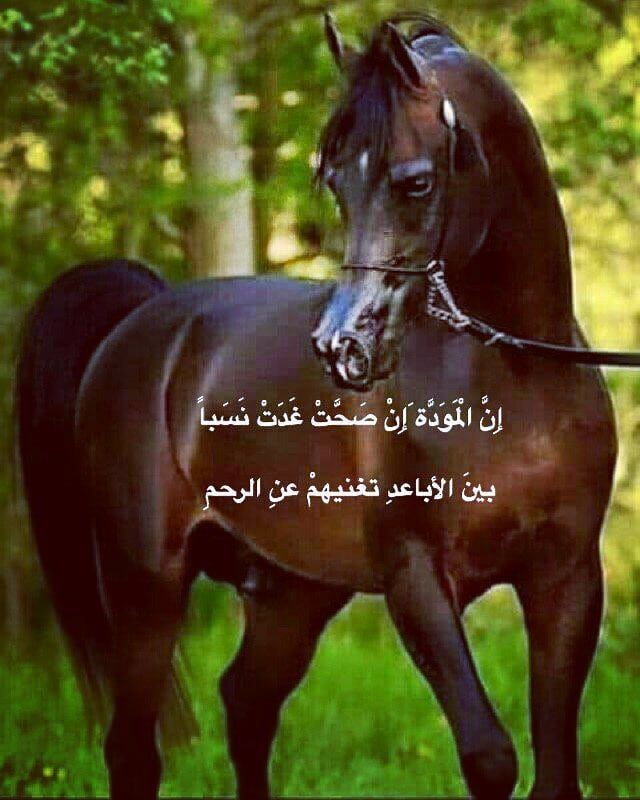 Follow Horse M1 Follow Us Like Comment Mention خيل وأدب خيل خي Horses Horse Lover Animals