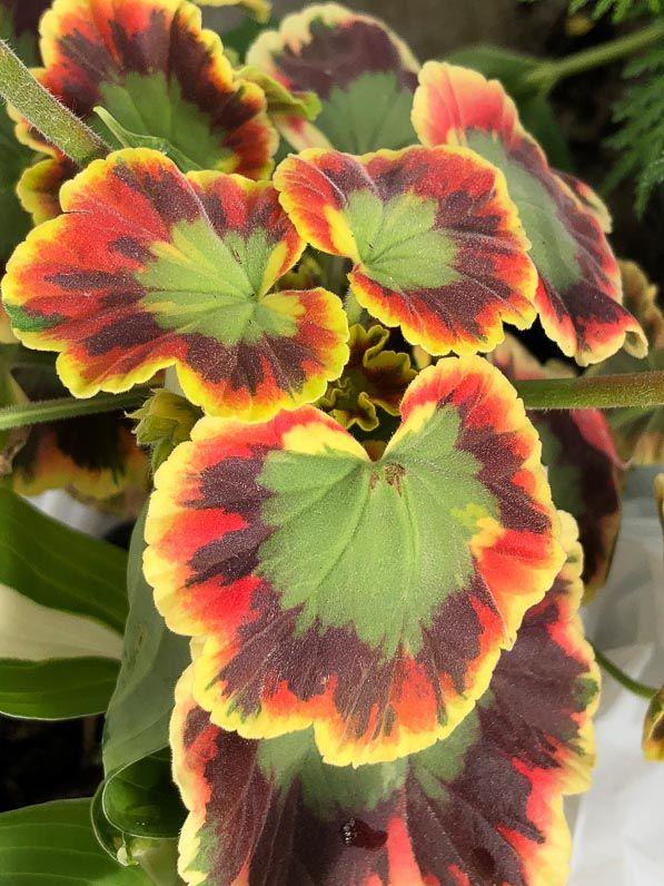 6610 best plantes que j 39 aime plants i love images on pinterest. Black Bedroom Furniture Sets. Home Design Ideas