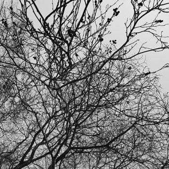 Fotoprint branches 64x68cm