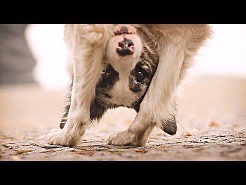 Border collie Zoe & AMAZING dog tricks!