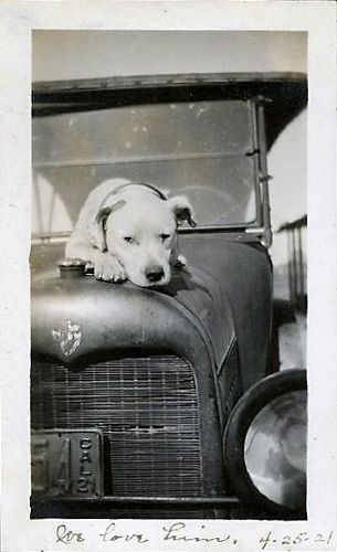 "This vintage photo has no people depicted in it.....only a lone Pit Bull.  Yet, it is the 3 simple words that this dog's owners wrote at the bottom of the photo that speak volumes about their bond and that make this an appropriate photo for this particular board -- ""We Love Him.  4-25-21"".    ~Skye"
