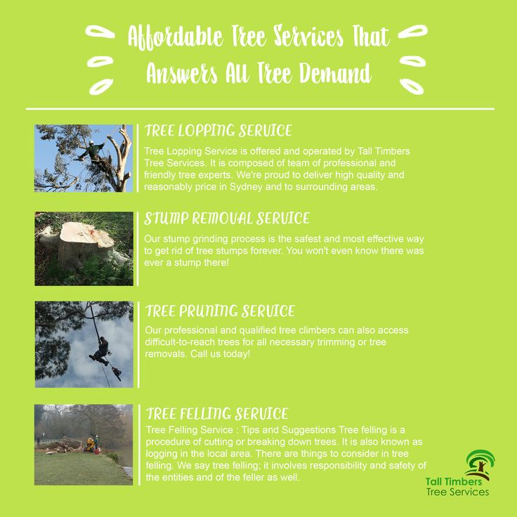 Affordable tree services with skilled arborists must intertwine with complete and upgraded equipment and machineries. Visit ↓ https://talltimberstreeservices.com.au/affordable-tree-services/