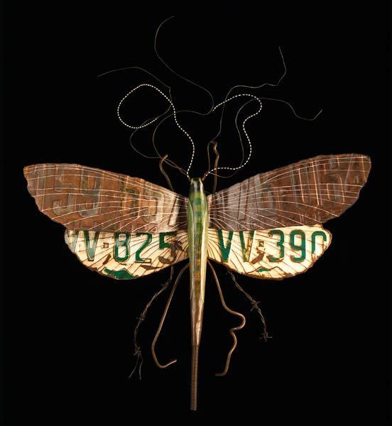 http://www.karivonwening.com   Moths and Insects by Kari von Wening
