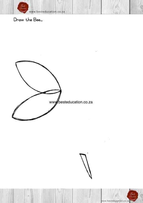 Draw your bee Grade 4 Art - www.besteducation.co.za