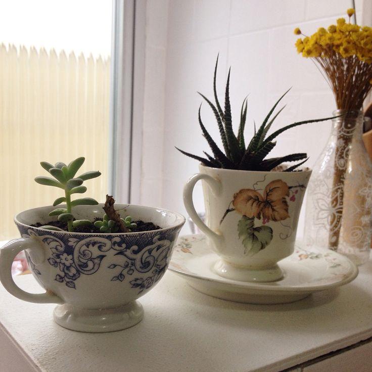 Finalmente o verde compondo a casa... Reaproveitamento de xícara que virou vaso de plantinha.