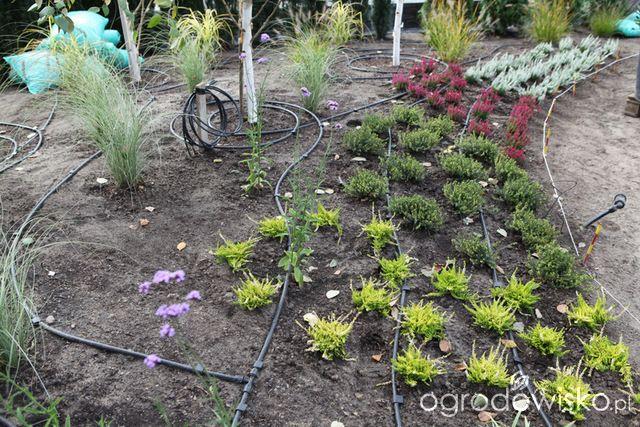 Ogród z lustrem - strona 49 - Forum ogrodnicze - Ogrodowisko