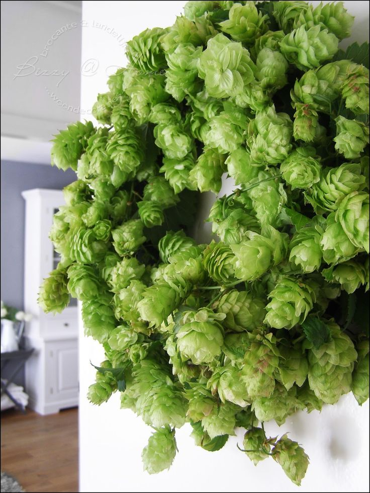 HOPS Wreath!  This will put you to sleep in minutes.  It will dry to a golden brown.  BUT the smell is amazing.  Hops make a wonderful addition to rice pillow.  if you have a hard time falling asleep, make a rice pillow with hop flowers inside! you'll be amazed and wish you knew this years ago!!!