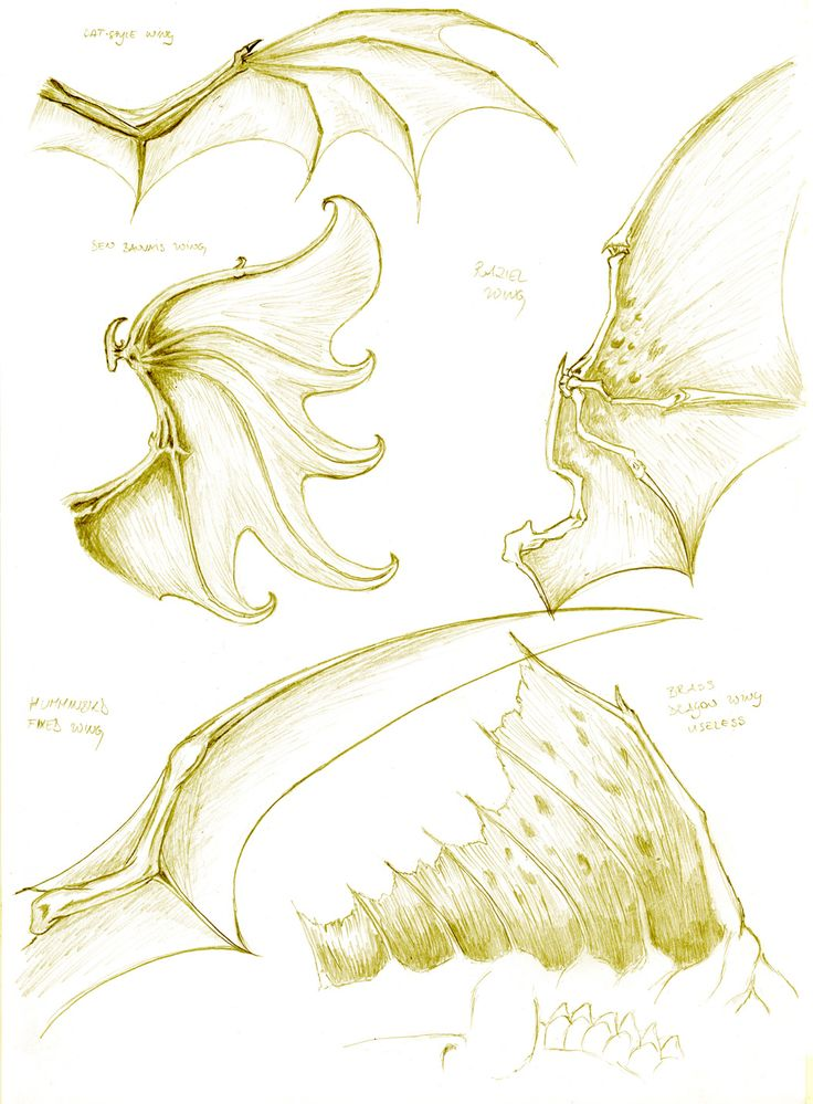 Dragon anatomy- wing study by turel.deviantart.com