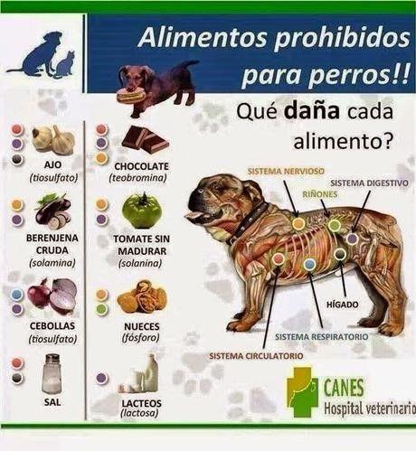 Alimentos Prohibidos para Perros                                                                                                                                                     Más