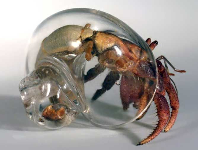 Hermit crab without shell - photo#46