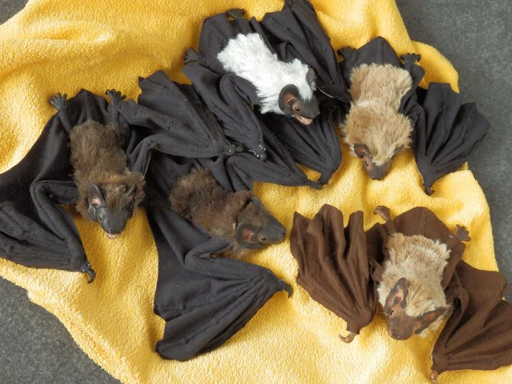 Real bats, five small pets. Made by Juditheart