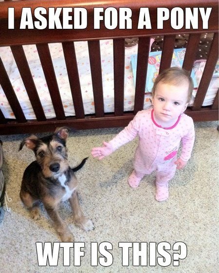 it's understandable: Little Girls, Puppies, Dogs, Funny Pictures, Ponies, Children, Funny Stuff, Kids, So Funny