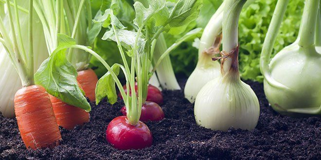 Epic Gardening teaches the latest and greatest in urban gardening, hydroponics, and aquaponics - everything you need to know to start growing your own food at home.